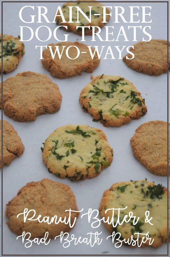A Delicious Treat For Your Best Four Legged Friend Two Ways
