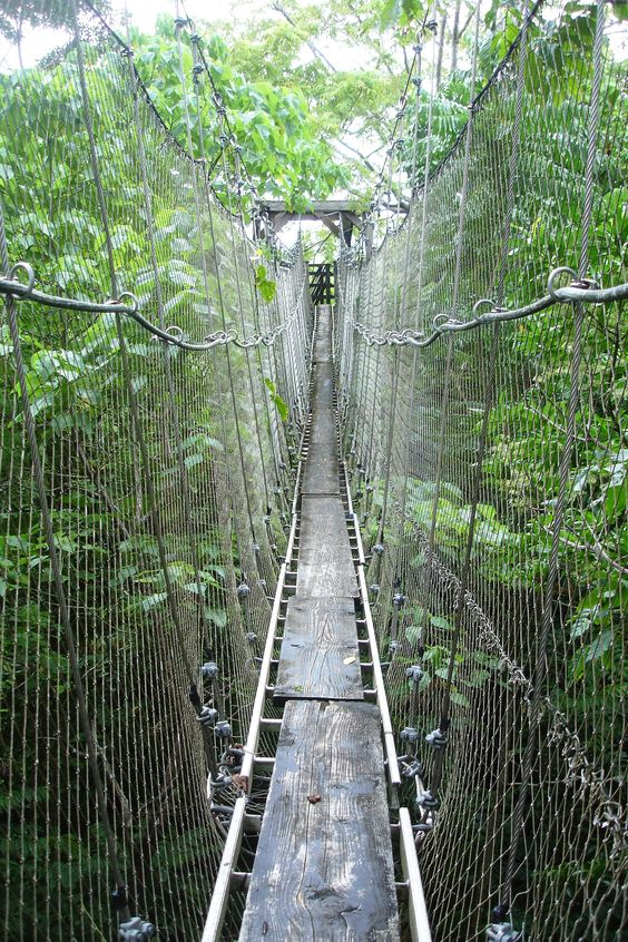 Rain forest bridge in Western Samoa