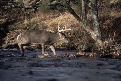 Big deer can turn up anywhere in the Peach State, but some areas are in a class…
