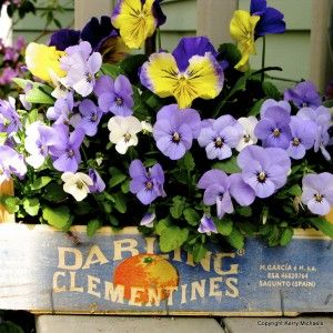 Clever container gardening tips and photos from one of my favorite resources - Kerry Michaels of About.com