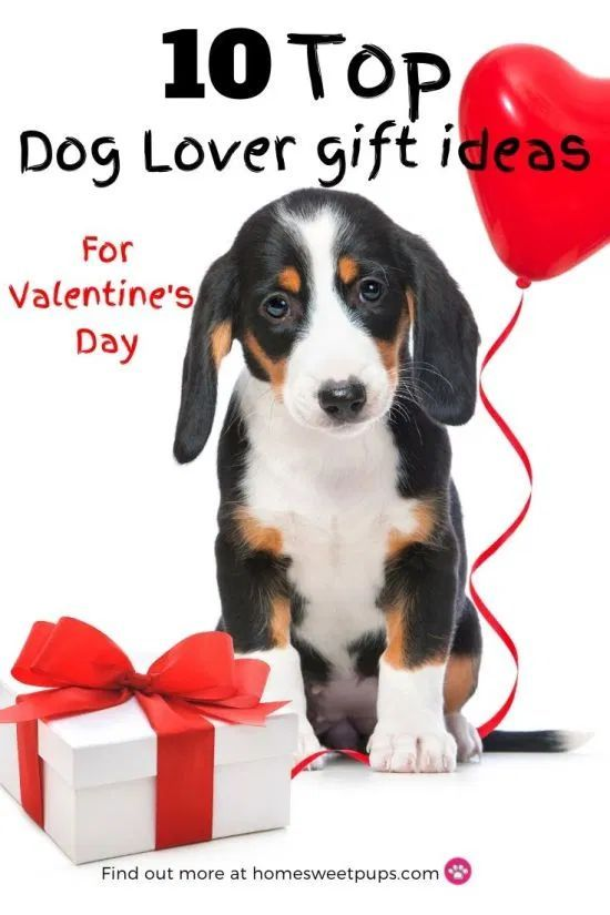 10 Top Dog Lover Gift Ideas For Valentine S Day Dog Lover Gifts Dog Gifts Dog Lovers