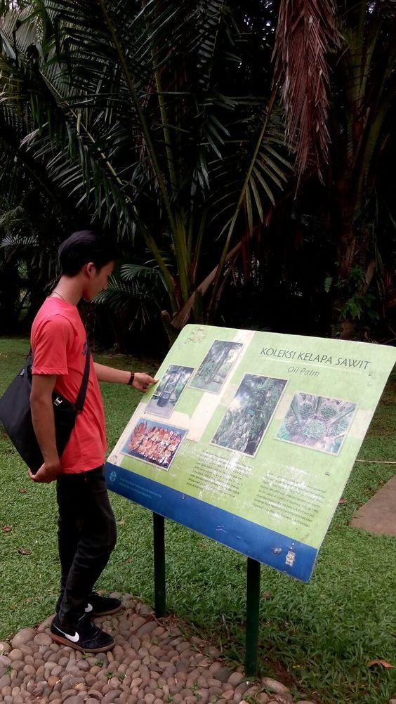 Kebun Kelapa Sawit Di Bogor