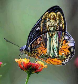 butterflies are just little angels