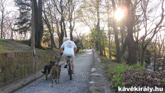 Visszaszámlálás az élet a napi 3 kutyasétáltatás közben, amit biciklivel teszünk.