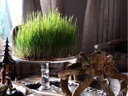 La tradition du blé (ou lentilles) de la Sainte Barbe, le 4 décembre, est Provençale et consiste à semer dans 3 petites coupelles ( symboles de la trinité) du blé en vu de le faire pousser (jusqu'à l'épiphanie, 5 janvier) et d'assurer prospérité pour l'année à venir. On disait à l'époque, en Provençal : « Quand lou blad vèn bèn, tout vèn bèn ! », ce qui signifie « quand le blé vient bien, tout vient bien »