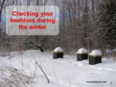 It's difficult for bees and beekeepers during the long cold of winter; but there are some things you can do to see you and your hives throug...