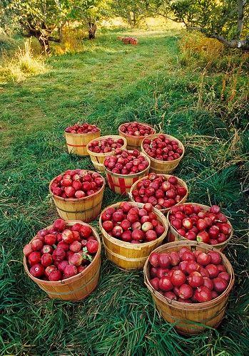 Apples...