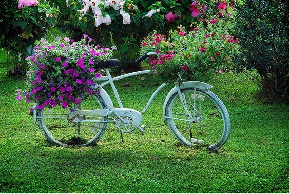 Fleurs sur le vélo...