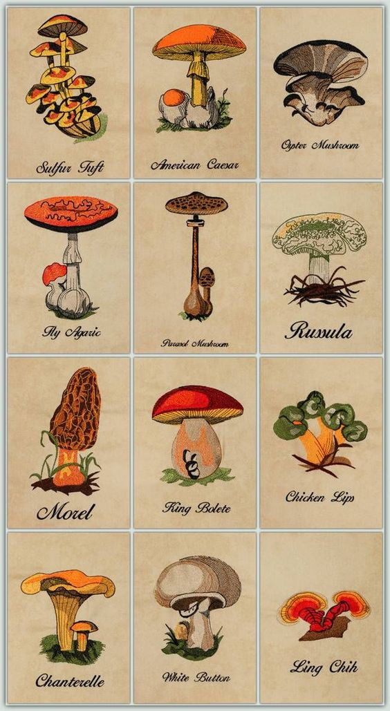 Vintage Mushrooms!  Wouldn't this be great for kitchen accessories & how about a colorful quilt or throw? These designs are perfect to make items to sell at bazaars and craft shows. The Mushroom and the Name are separate designs so you can decide whether to use them. They come in Small, Medium, Large and Jumbo and the complete set contains all 4 sizes.: