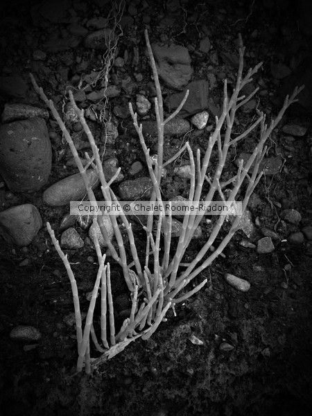 Plant Life by Chalet Roome-Rigdon on ARTwanted