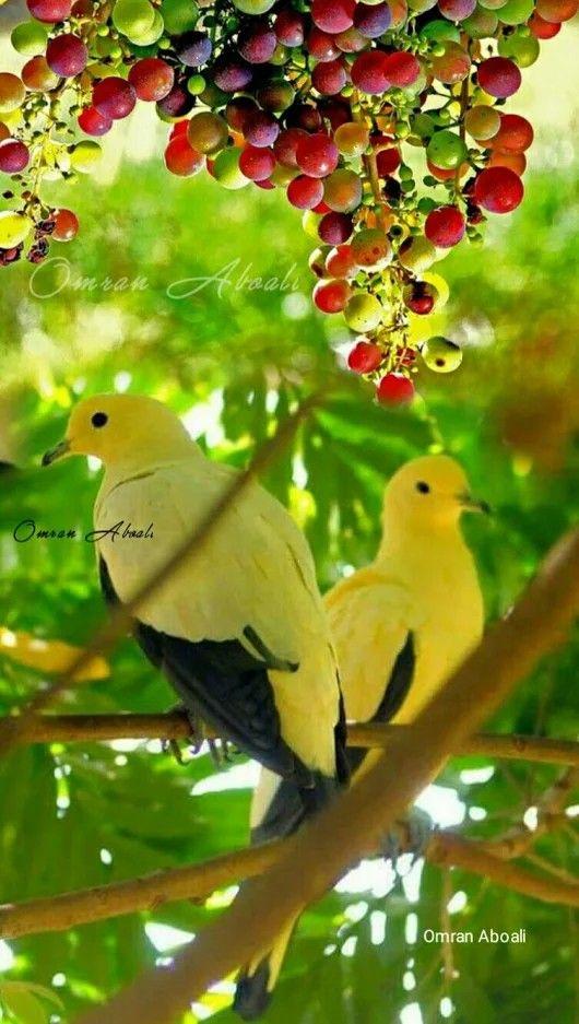 Pin By Franci Waller On Madarak Beautiful Birds Pet Birds Bird Pictures