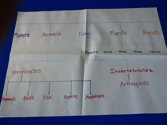 ... for living things : Classifying Living Things Worksheets 5th Grade