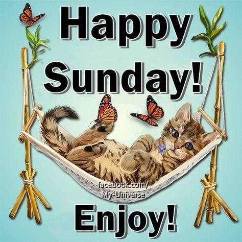 Happy Sunday! Enjoy! #sunday hammock cat butterflies happy sunday