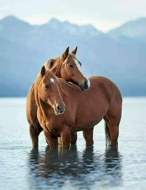 Beautiful Horses Pferdefotos Pferde Pferdeliebe