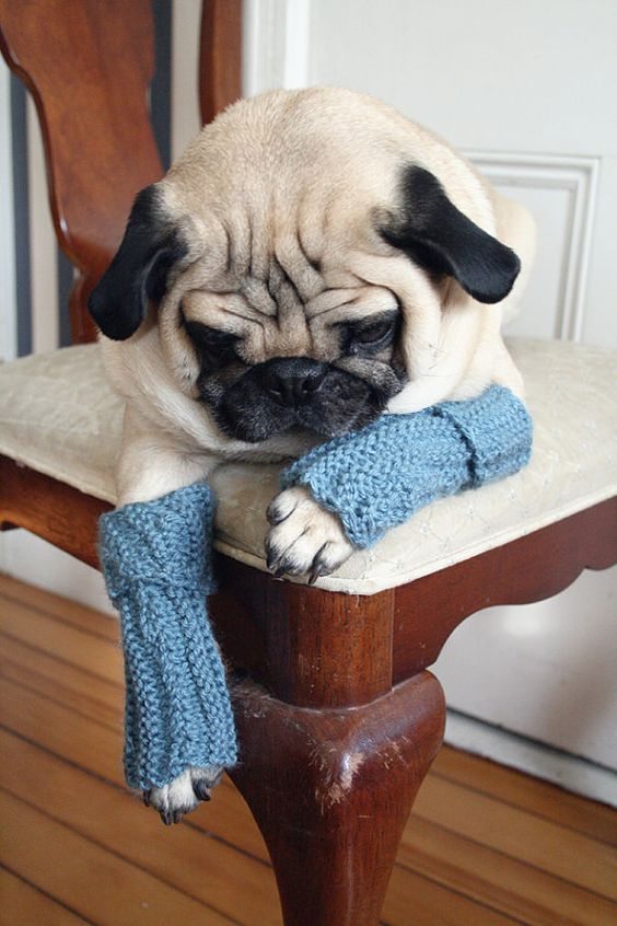how to make dog leg warmers