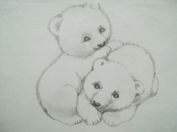 Osos Dibujo a Lpiz Carina Malarchia  dibujos  Pinterest