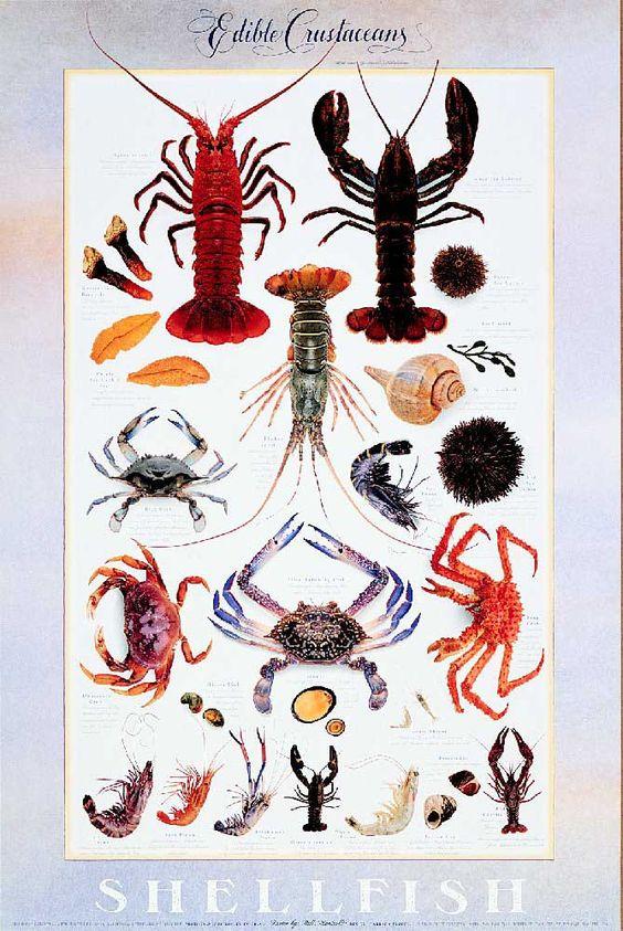 I Lobster A Crustacean Odyssey