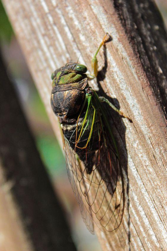 Cicada chillin