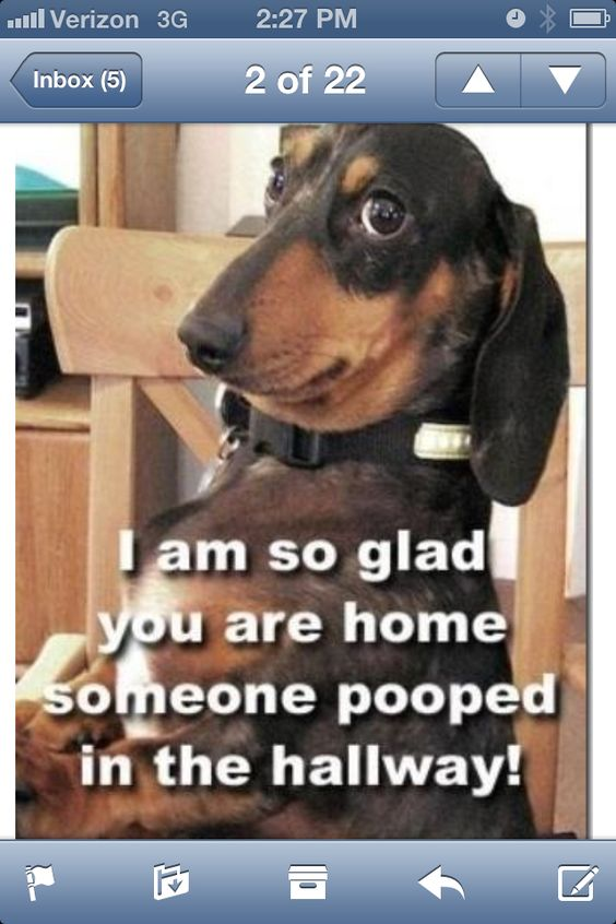 Funny dogs, Dr. who and Quotes on Pinterest