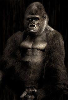 اجمل صور حيوانات اليفة ومفترسة وصور كلاب وقطط مضحكة جدا 2018 Gorilla Animals Animal Photography