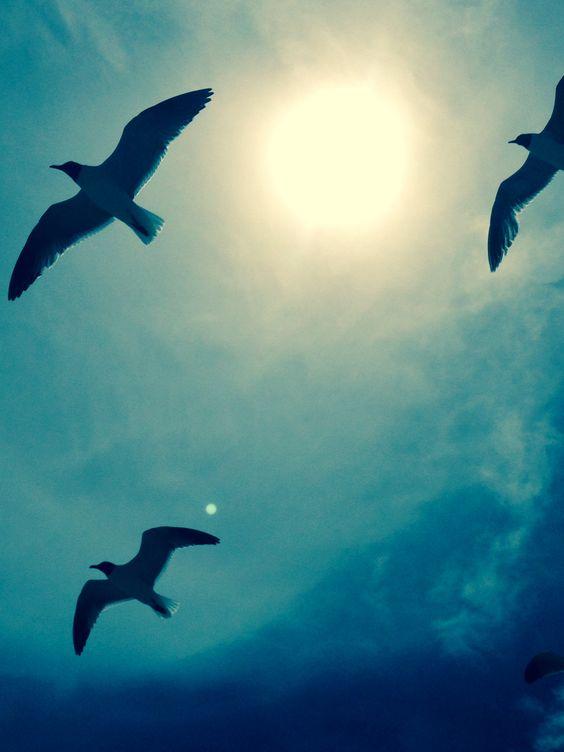 Sea gulls at OBX....