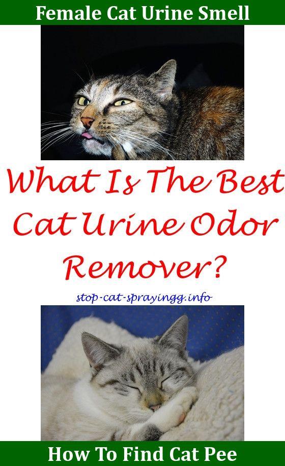 19a03551692487401e5a2fd4abd9ebe0 - How To Get Rid Of Cat Spray Smell Under House