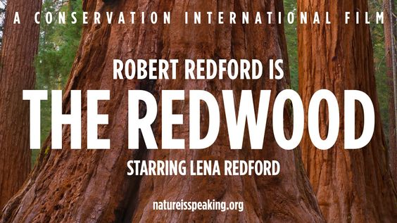 Nature Is Speaking – Robert Redford is The Redwood | Conservation Intern...