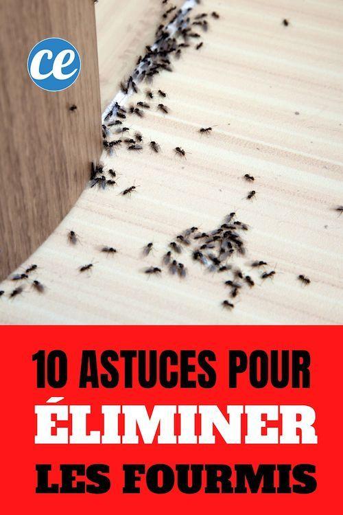 44++ Comment tuer les fourmis dans le jardin ideas in 2021