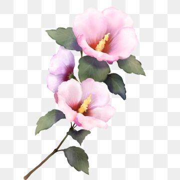 Transparent Flowers Pink Transparent Hibiscus Hibiscus Drawing Transparent Flowers Hibiscus