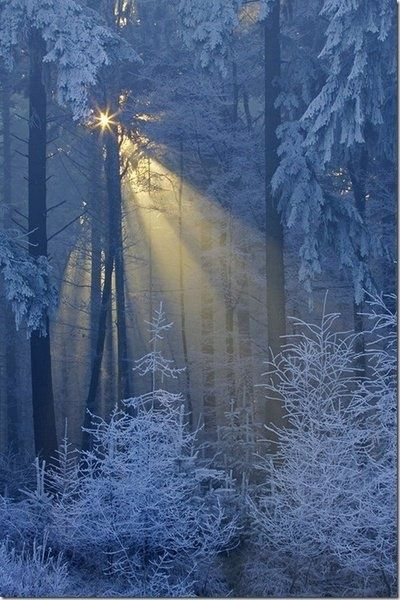 Winters light through the snowy branches                              …