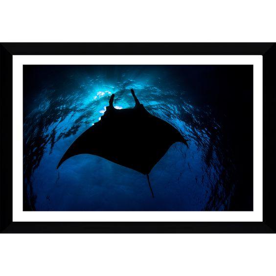 FramedCanvasArt.com Craig Dietrich 'BlackManta' Framed Plexiglass Underwater Photography