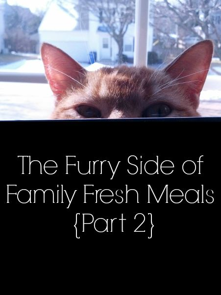 The Furry Side of Family Fresh Meals {Part 2} Sheba® Cat Food Review  #ShebaBrand #BH