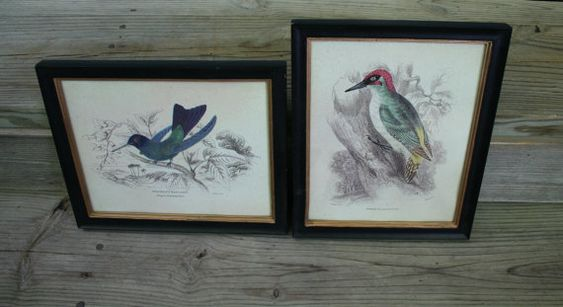 Pair of Beautiful Wall Hanging Bird Pictures / by sixpencebluemoon