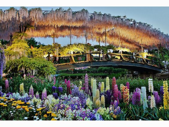 9 Real Life Places In Nature That Look Like A Fairytale Beautiful Flowers Garden Ashikaga Day Trips From Tokyo