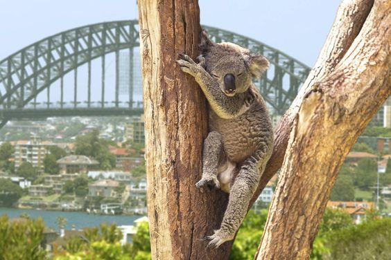 Sydney, Austrália | 53 cidades maravilhosas que todos deveriam visitar pelo menos uma vez