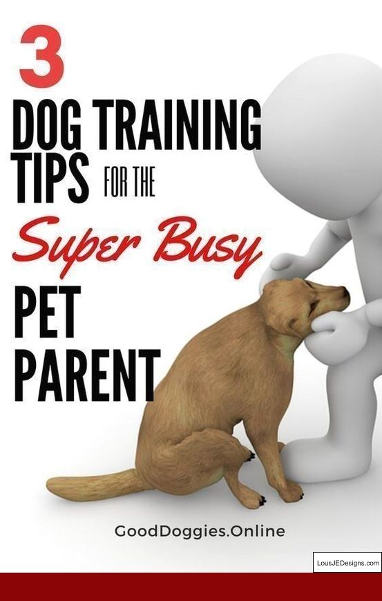 How To Train Dog To Stop Barking At Doorbell And Pics Of Training