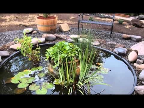8 39 stock tank pond with hyacinth goldfish mosquito fish for Stock tanks for fish