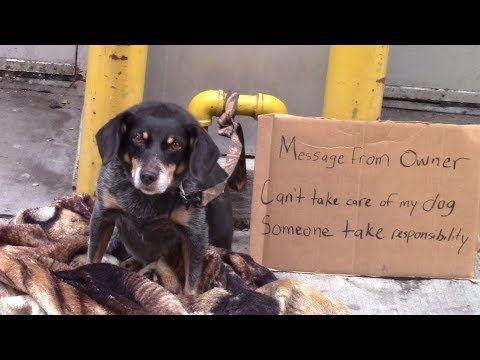 Would You Help A Homeless Abandoned Dog Youtube Dogs Faith