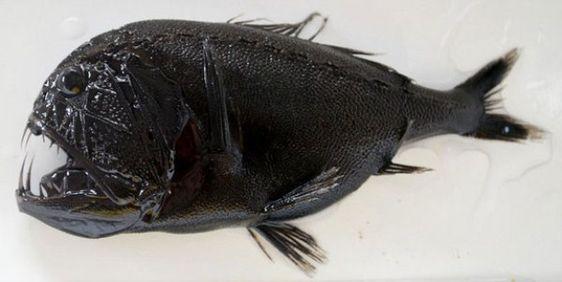 Creepy Deep Sea Creatures (39 pictures) | memolition