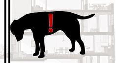 Cosa significa quando cane e gatto appoggiano la testa contro il muro