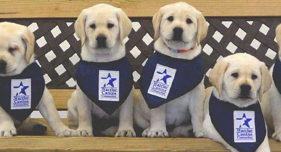 Canines Help Veterans Overcome PTSD