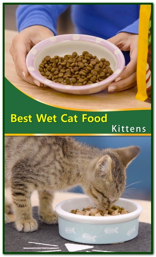 Best Wet Cat Food Kittens Wet Cat Food Cat Nutrition Dry Cat Food