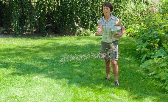 Die richtige Düngung für einen sattgrünen Rasen -    Der Rasen zählt zu den Gartenbereichen mit dem höchsten Nährstoffbedarf. Zum einen sind die Gräser von Natur aus keine Kostverächter, zum anderen müssen sie den wöchentlichen Substanzverlust durch das Rasenmähen ausgleichen. So düngen Sie Ihren Rasen richtig.
