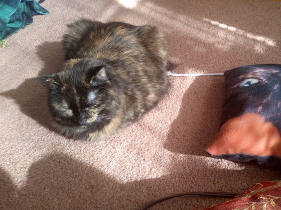 Charging my kittyPod