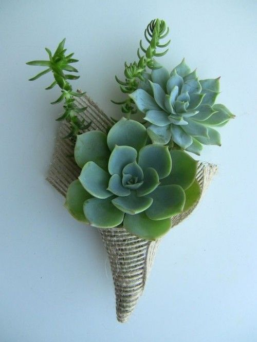 This is a fun example of a boutonniere done simply with succulents. Succulents are a great way to add texture, and are available year round!