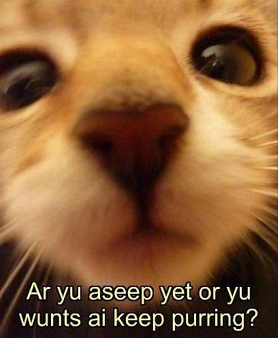 LOL Cats: 50 Awesomely Funny Cat Photos to Crack You Up: