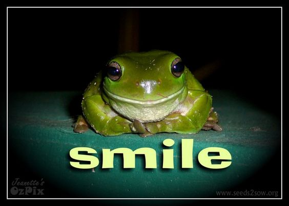 """A card to make someone's day/night a bit brighter.    .    INSIDE: """"You'll find that life is still worthwhile if you just SMILE!"""" (or you can change it to your own text.)    THE PIC: this is one of our friendly visitors that came to our front verandah each night – a Green Tree Frog."""