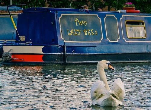 Life on the river Avon