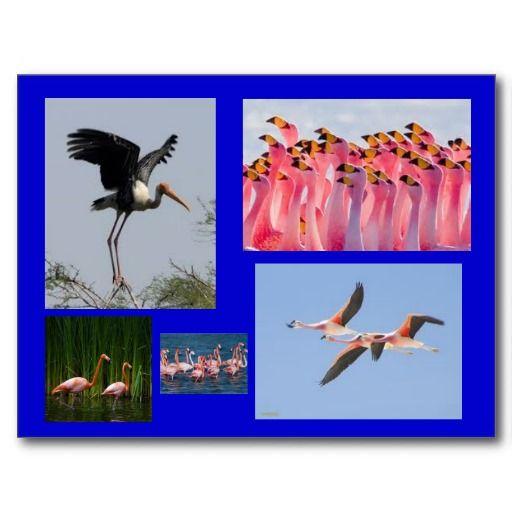 Birds of water postcard
