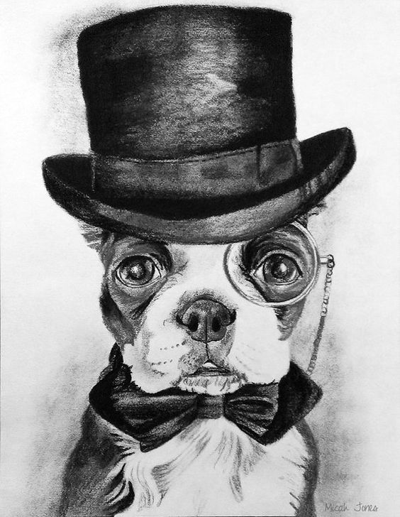 Drawing in Graphite and Charcoal. Boston Terrier. Black and White.